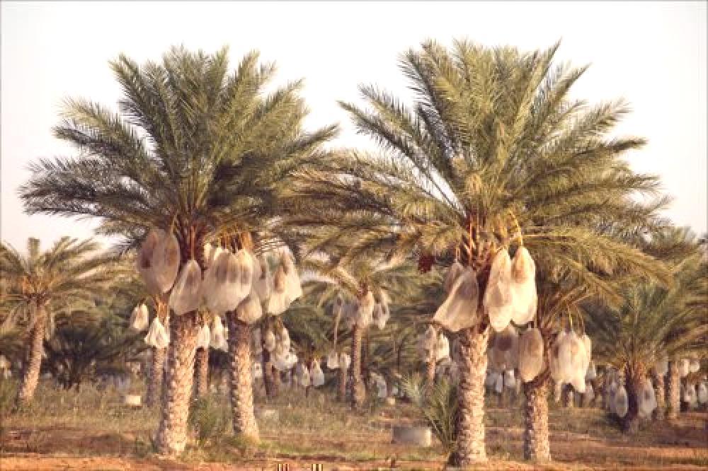 randki z palmami serwisy randkowe voor hoger opgeleiden